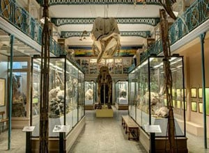 Natural History Museum of Lille