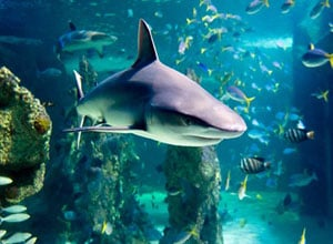 Sea Life Sydney Aquarium