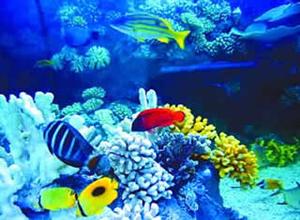 Ningbo Ocean World