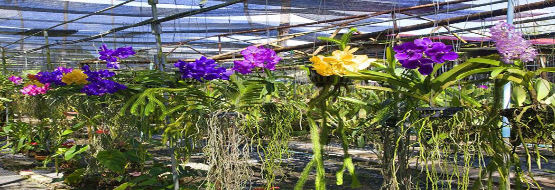 Thai Village And Orchid Farm Phuket Town Halal Trip