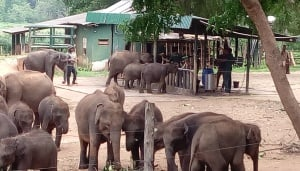 Udawalawe Elephant Transit Home & National Park