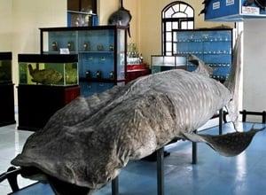 The National Oceanographic Museum of Vietnam
