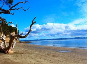 Auckland Beaches