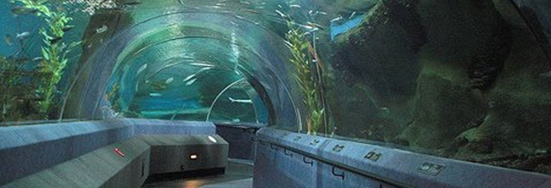 National Aquarium Of New Zealand, Napier Hawkes Bay Tourism