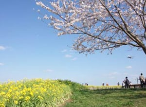 Sakura-no-Yama Hill