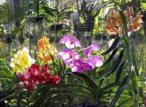 Thai Village and Orchid Farm