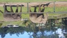 kysna elephant park
