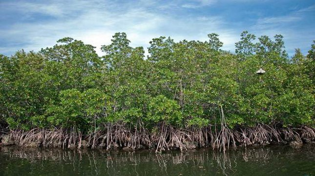 Have you visited Mangroves lately?
