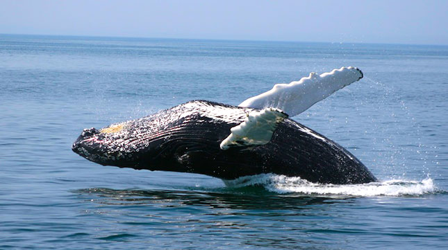 The Best Destinations for Whale Watching