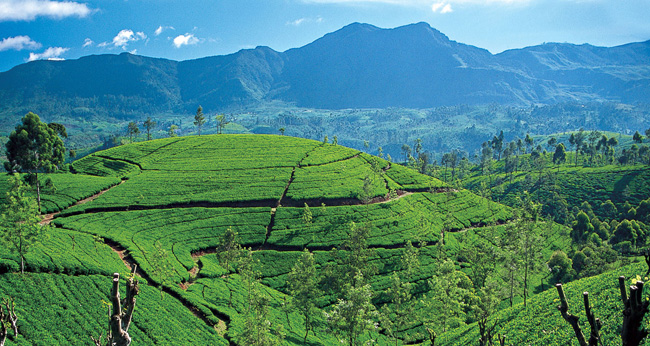 Traveling to Sri Lanka - The Pearl of the Indian Ocean