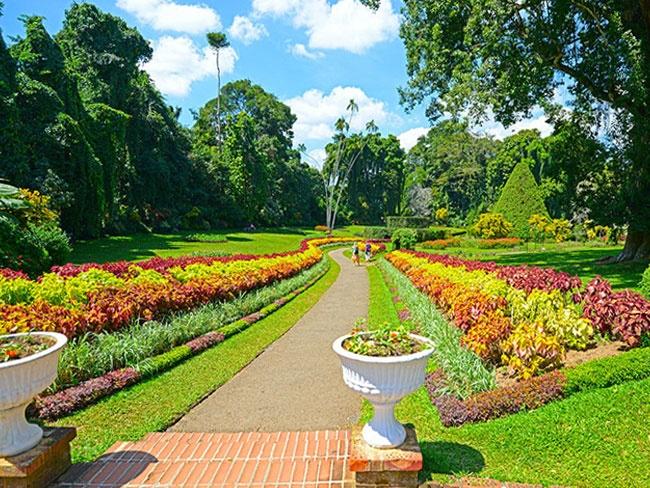 5 Reasons Why A Trip To Sri Lankau0027s Peradeniya Botanic Gardens Is Worth It!