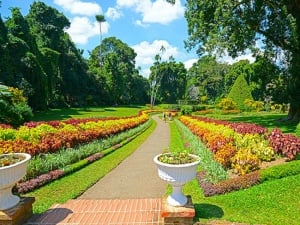 5 Reasons Why a Trip to Sri Lanka's Peradeniya Botanic Gardens is Worth it!