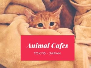 Visit these 5 Interesting Animal Cafes in Tokyo!