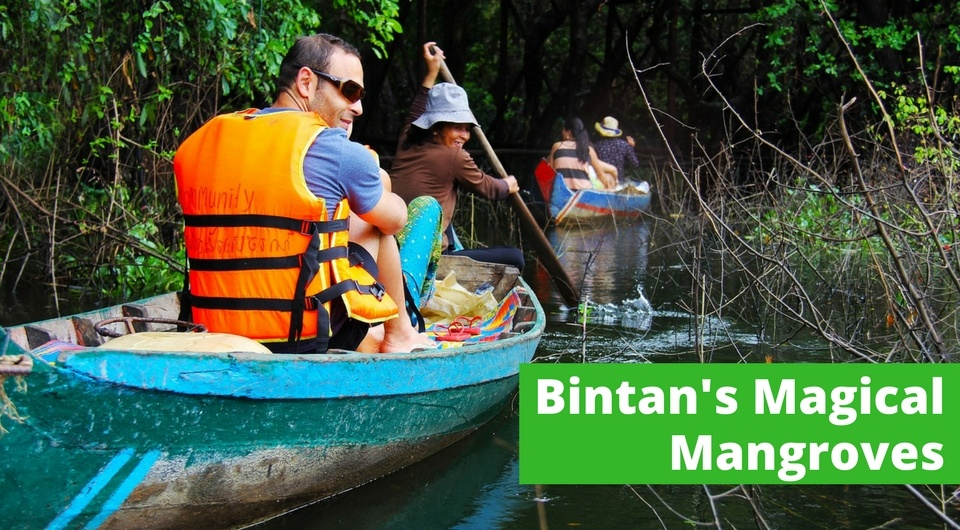 All You Need to Know About Bintan's Magical Mangroves