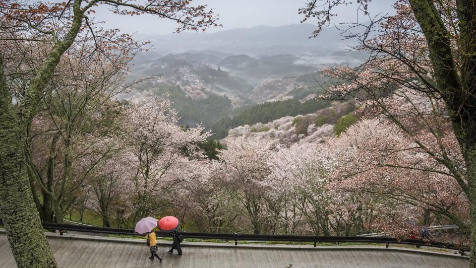 An Hour Ride Away - Nara Park, Japan