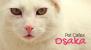 5 Awesome Pet Cafes in Osaka