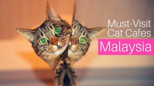 3 Must-Visit Cat Cafes in Malaysia