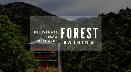 Forest Bathing: Relax, Rejuvenate & Recharge With Nature When You're In Japan