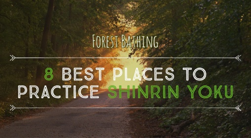 Escape Into Nature! Visit These 8 Best Places To Practice Shinrin Yoku!