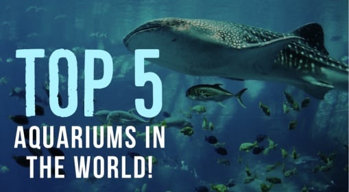 Be Mesmerised By Creatures Of The Water At These 5 Aquariums Around The World
