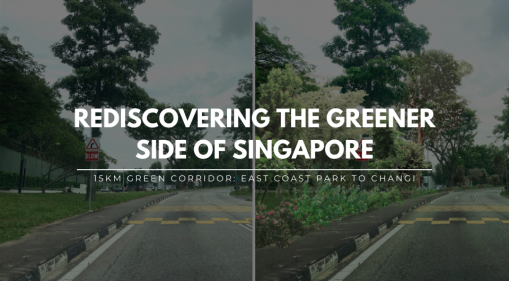 Rediscovering the Greener Side of Singapore: East Coast Park - Changi Beach Park Green Corridor