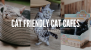 Cat Friendly Cat Cafes in Singapore