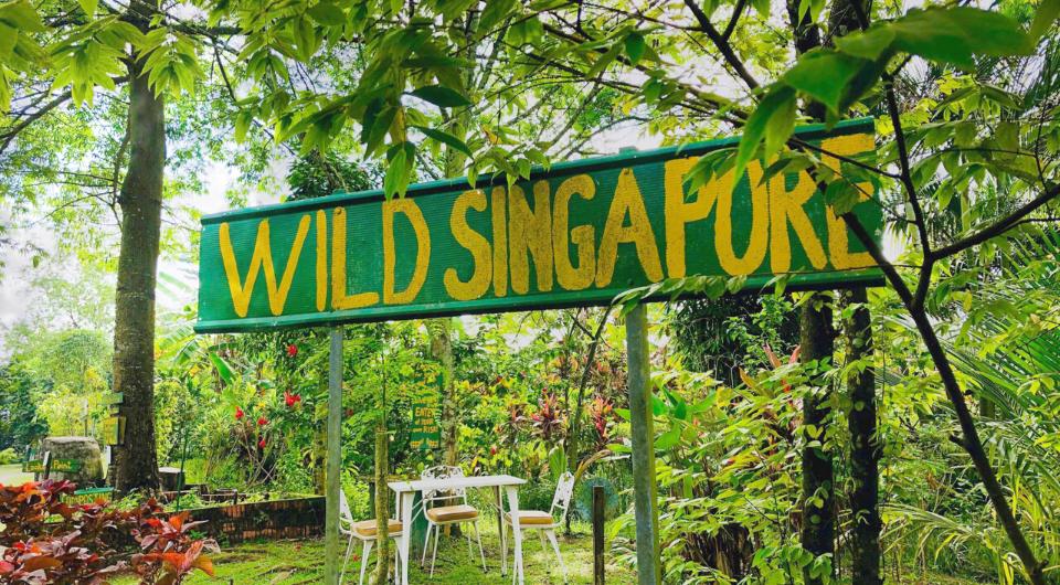 Bollywood Veggies farm Singapore