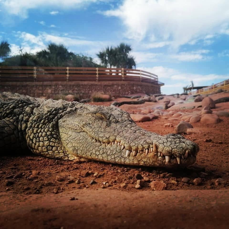 Crocoparc, Crocodile Park Agadir Morocco
