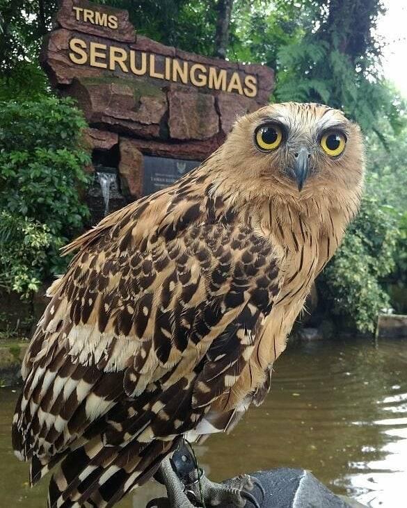 Seruling Mas Zoo