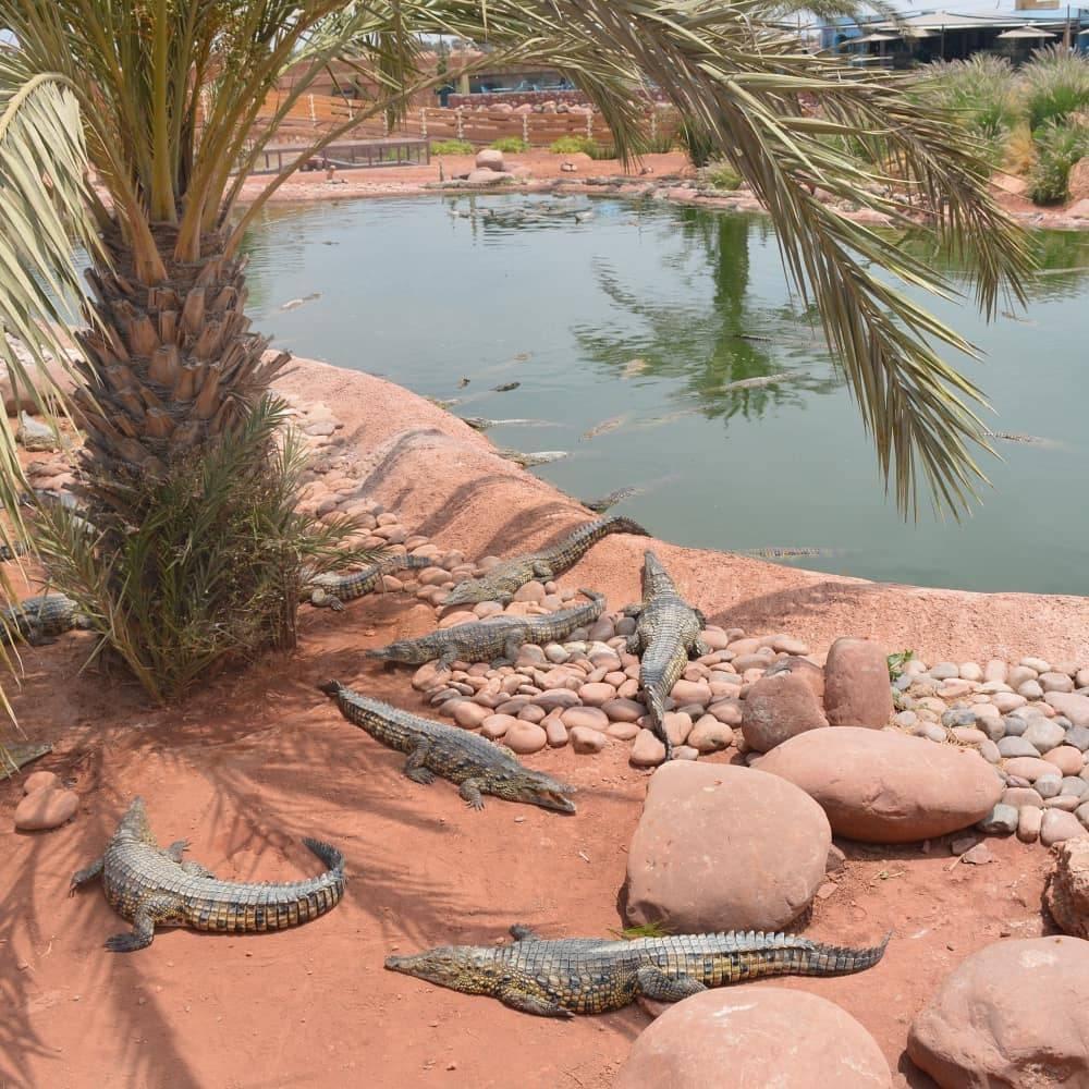 Crocoparc, places to go in Agadir Morocco,