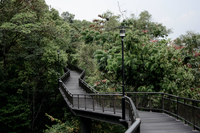Canopy Walk Southern Ridges Kent Ridge Singapore