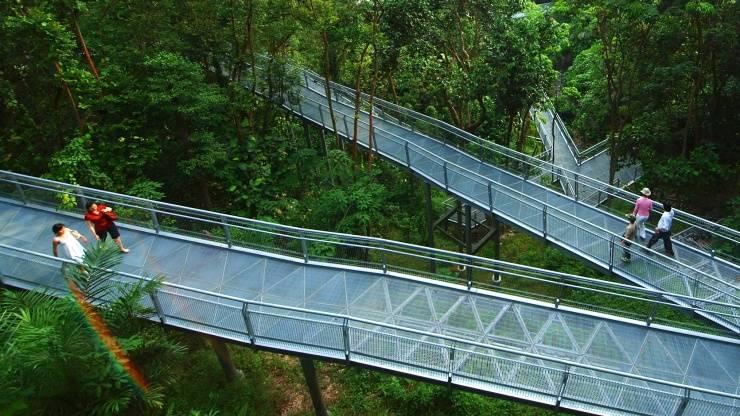 Forest Walk Southern Ridges Singapore