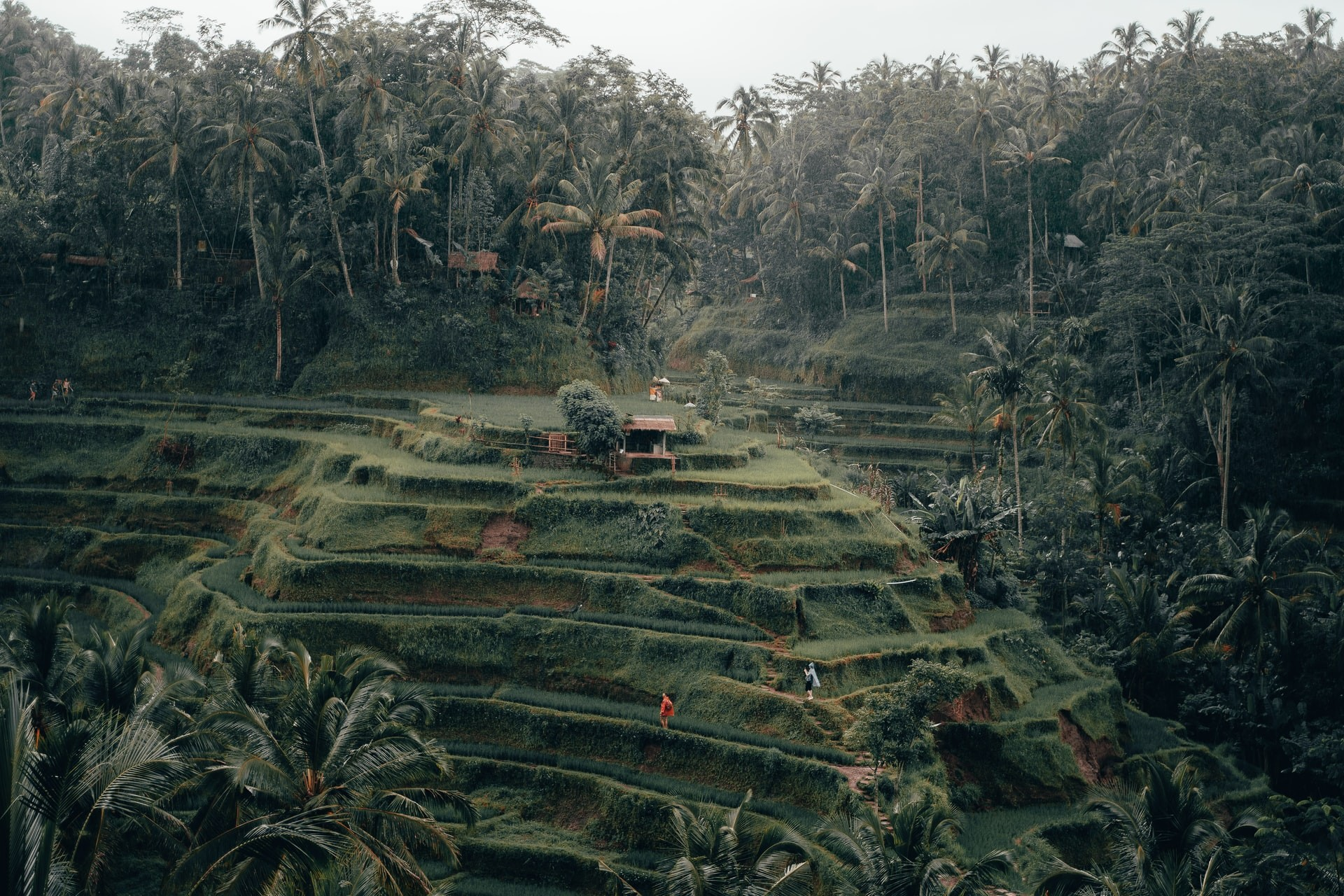 Tegalalang Rice Terrace Bali Indonesia