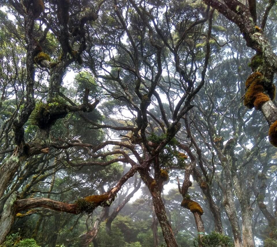 Hutan Lumut Singgalang Sumbar Indonesia