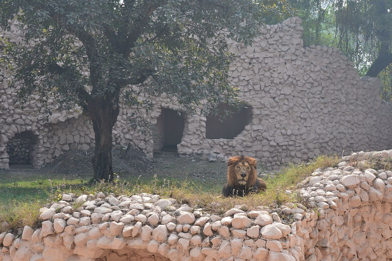 Lucknow Zoo India