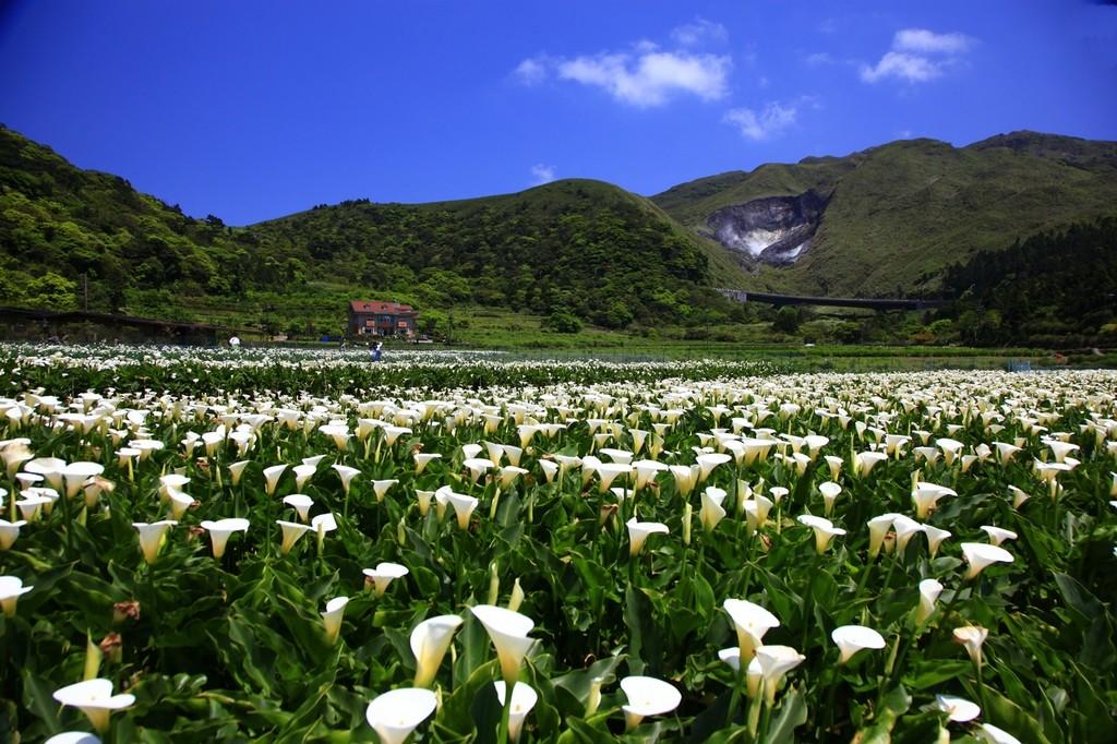Yangmingshin National Park Beitou Taiwan
