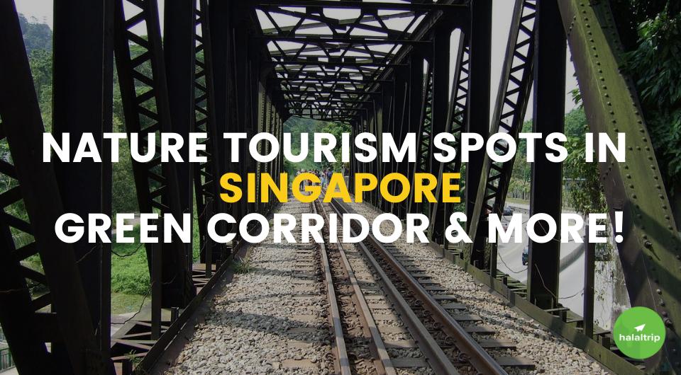Nature Tourism in Singapore: Singapore's Green Corridor & More
