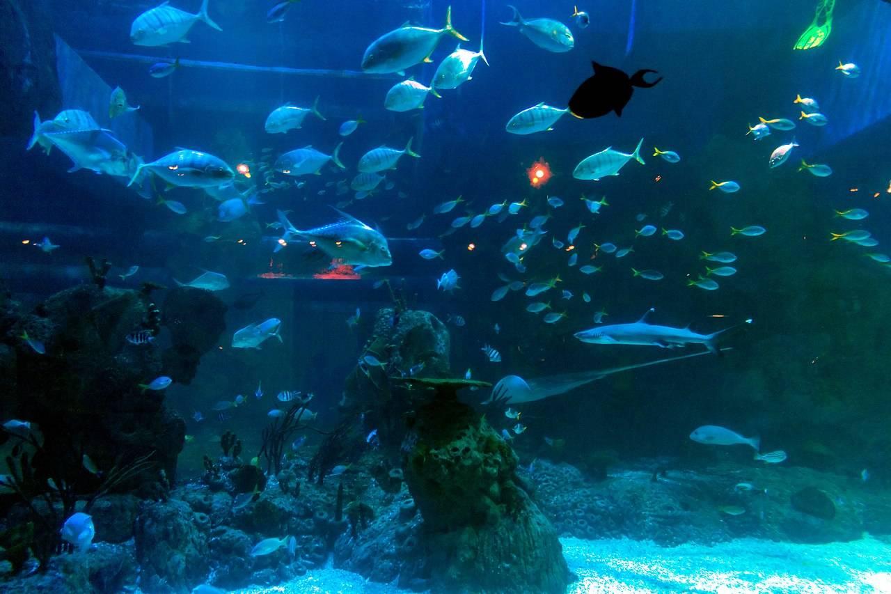 Jakarta Aquarium & Safari Indonesia