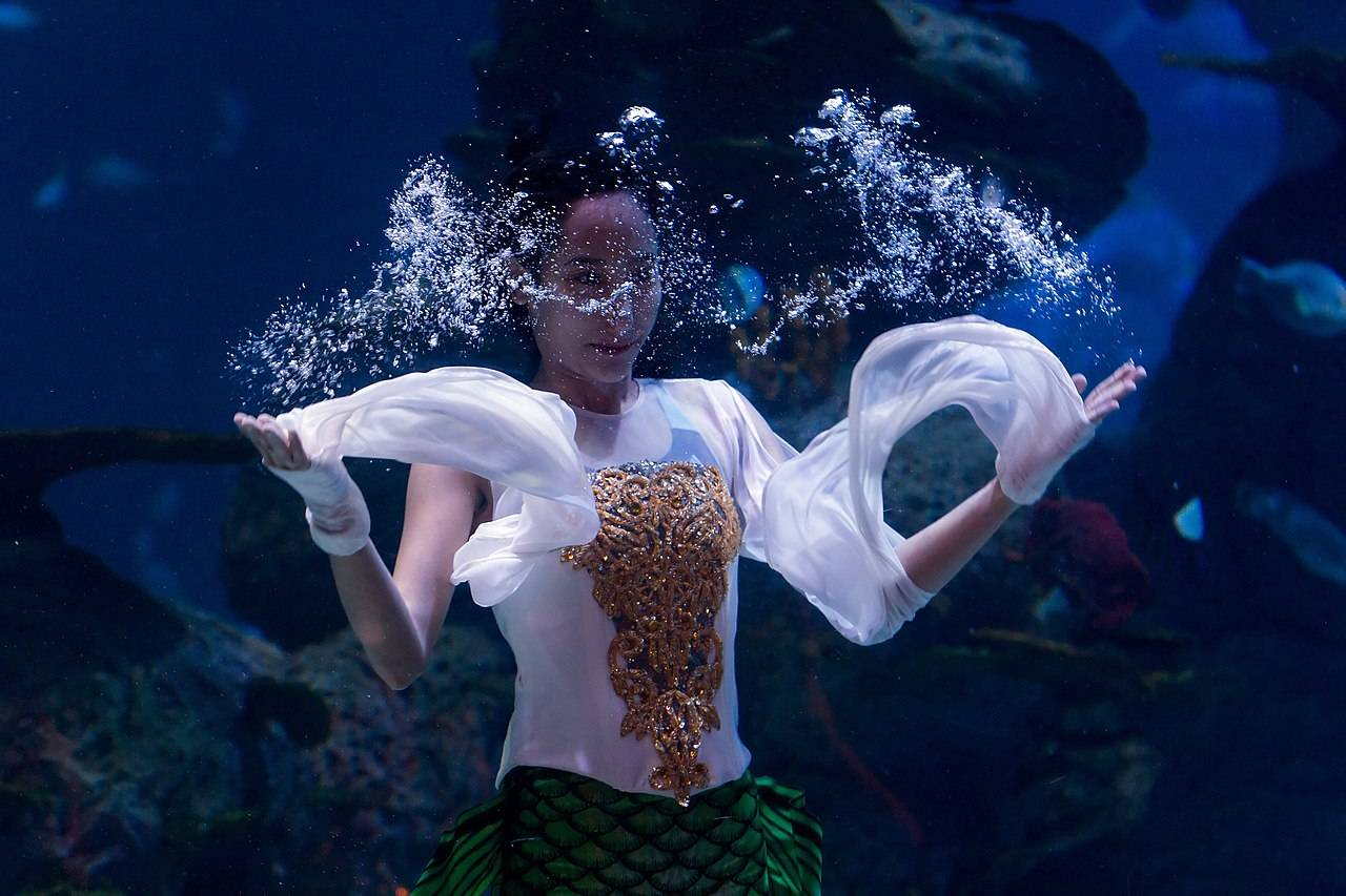 Teater Akuarium Jakarta Aquarium & Safari Indonesia