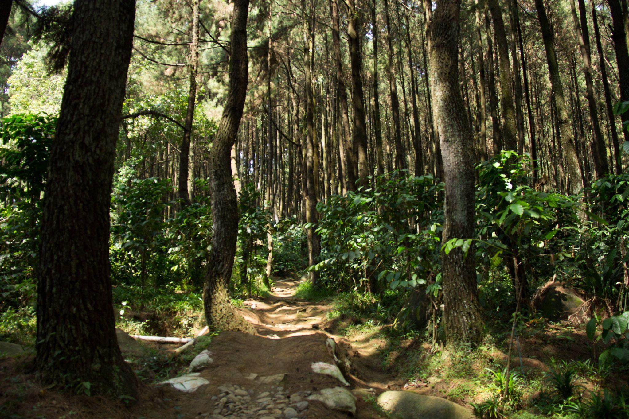 Gunung Pancar Bogor Indonesia
