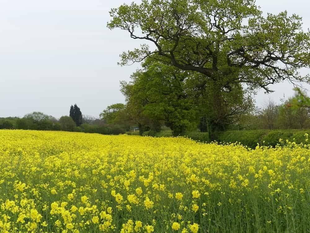 Spring in the UK
