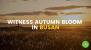 Witness Autumn Bloom in Busan